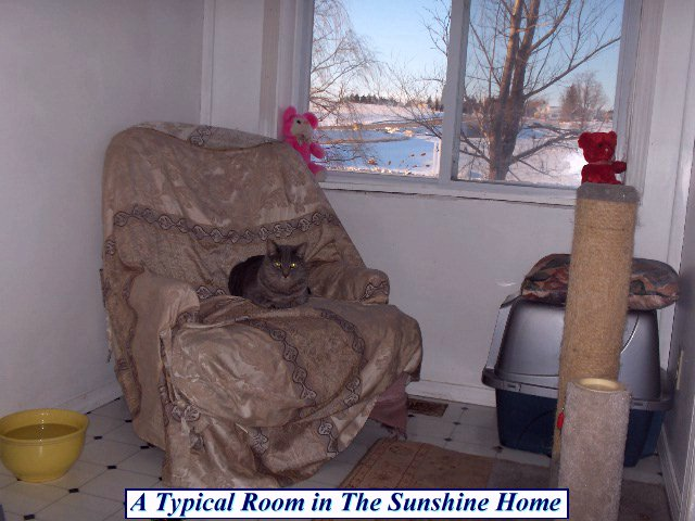 Typical Room at The Sunshine Home at This Old Cat